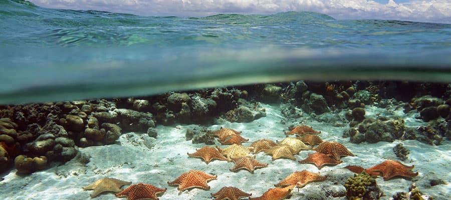 Seaworld Explorer en tu crucero por las Bahamas