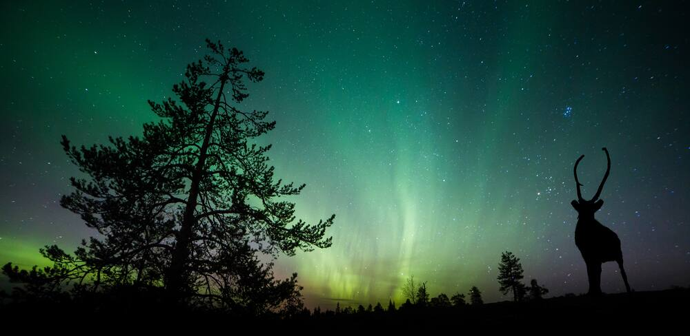 Northern Lights Above Alaska Forest