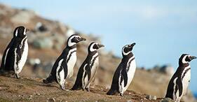 Great Patagonian Adventure
