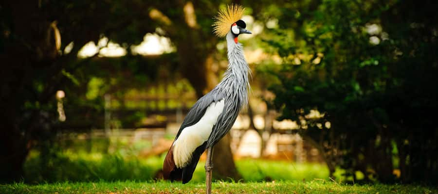 Check out Audubon Park when you cruise to New Orleans