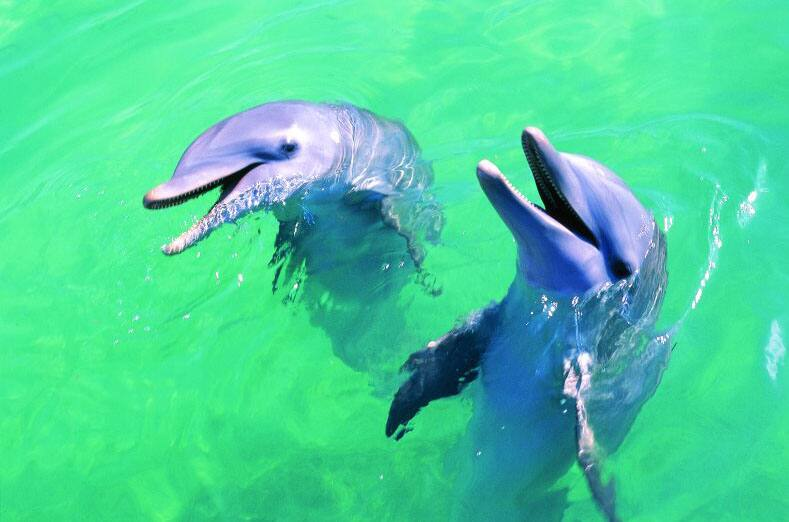 Baignade avec les dauphins