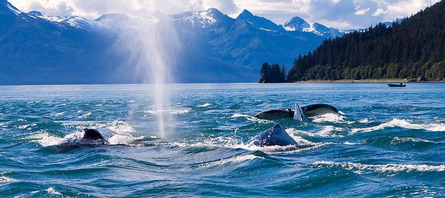 Wildtiere in Seward auf Ihrer Alaskakreuzfahrt