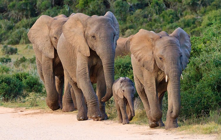 Africa Cruises Norwegian Cruise Line to Bring Out Your Wild Side