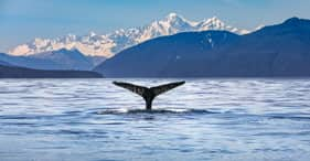 Whale Watching & Wildlife Quest