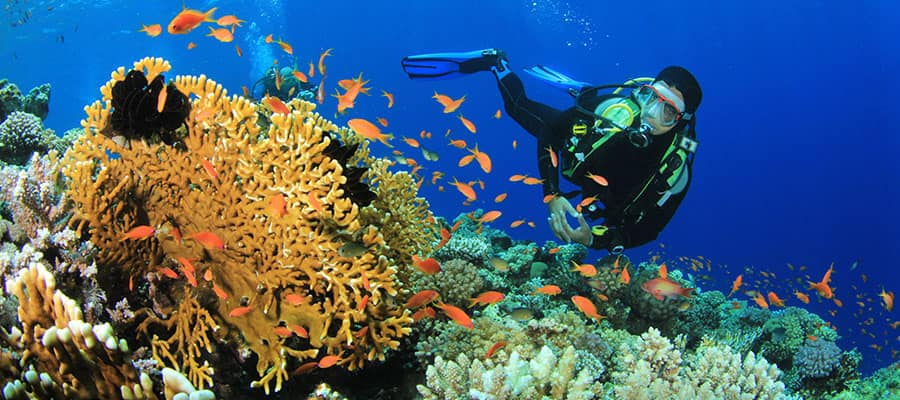 Go diving in Oranjestad when you cruise the Caribbean