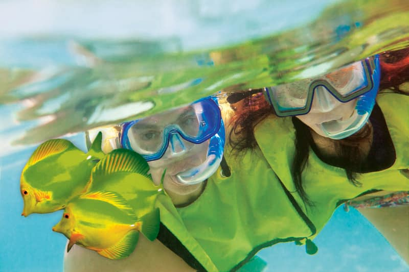 Snorkel in Great Stirrup Cay