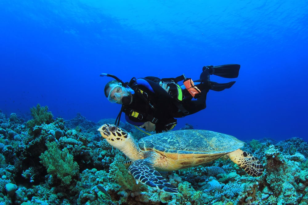 Top Things to Do in Cozumel on a Cruise