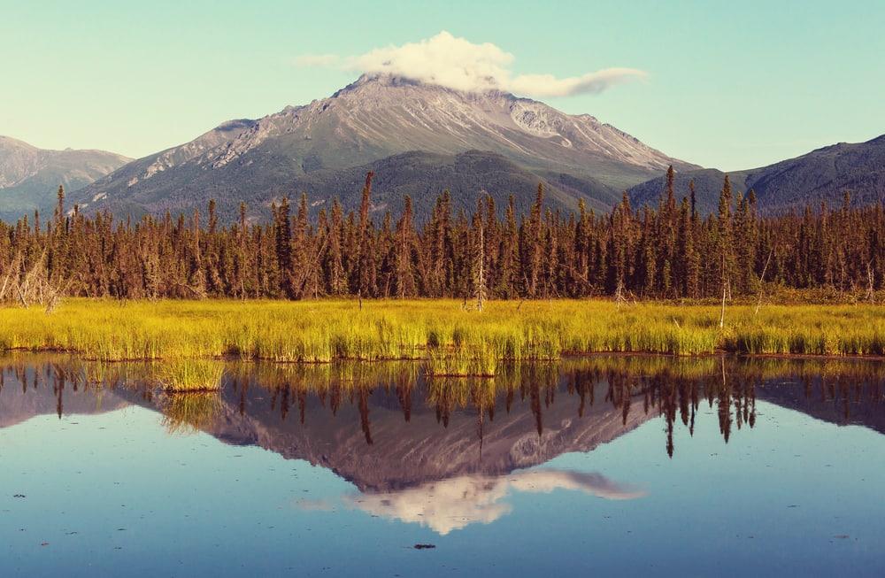 Summer in Alaska
