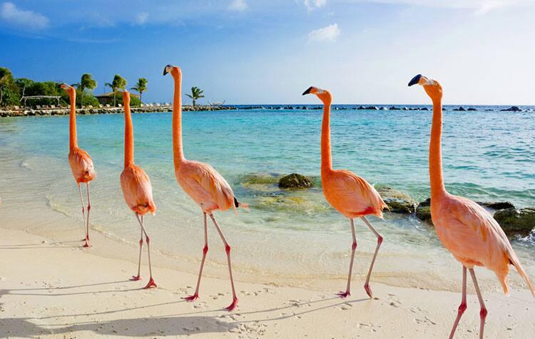 Aruba's Pristine Coastline