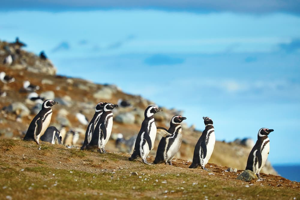 5 Unconventional Excursions to Try on Your Next Cruise