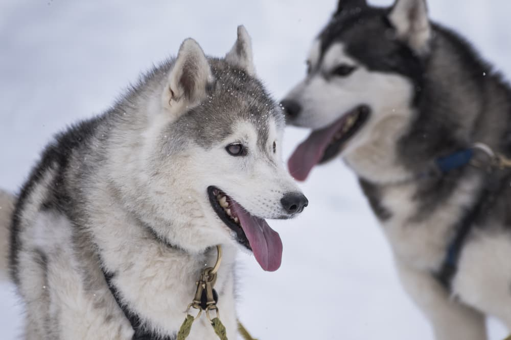 Experience Alaska Wildlife with Norwegian