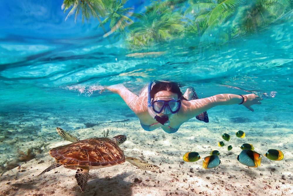 Snorkel Along the Great Barrier Reef