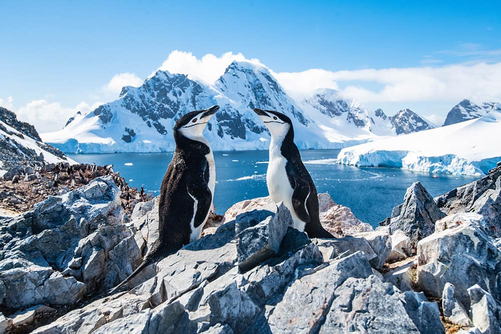 See Chinstrap Penguins on a 2021 Antarctica Cruise with Norwegian