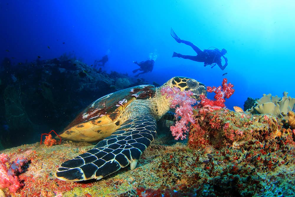 Best Snorkeling and Diving in The Caribbean
