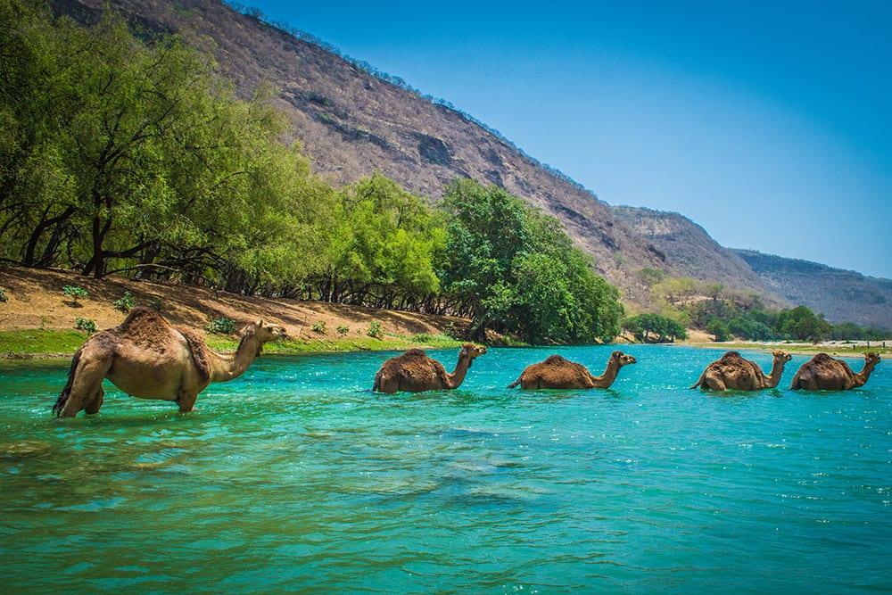 Salalah, Oman Cruise