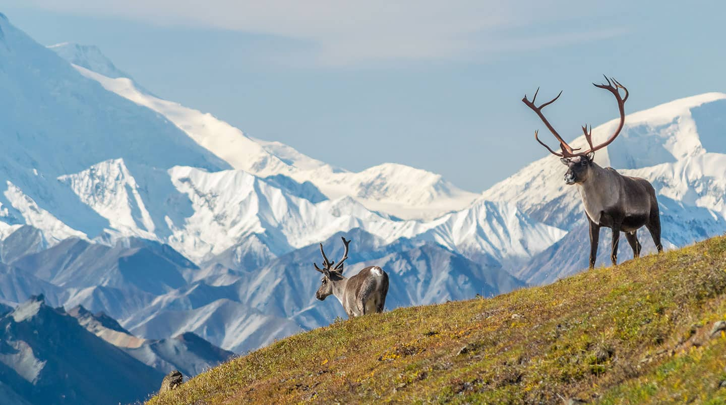 Denali/Valdez Explorer - Northbound Cruisetour