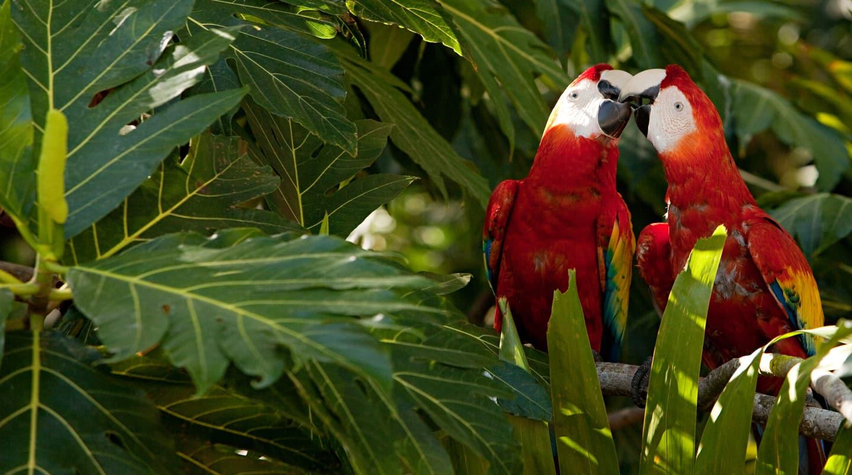 Caribbean: Harvest Caye, Cozumel & Roatan