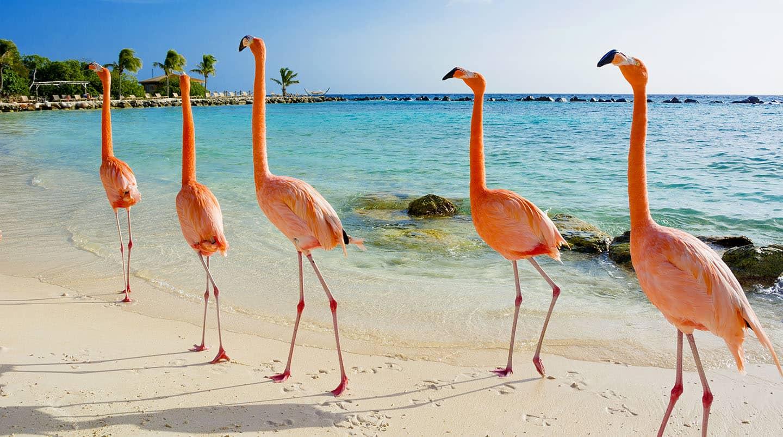 Caraïbes :Curaçao, Aruba et République dominicaine