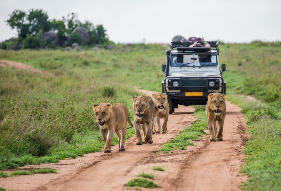 Enjoy a Safari on one of Norwegian's Cruises to Africa