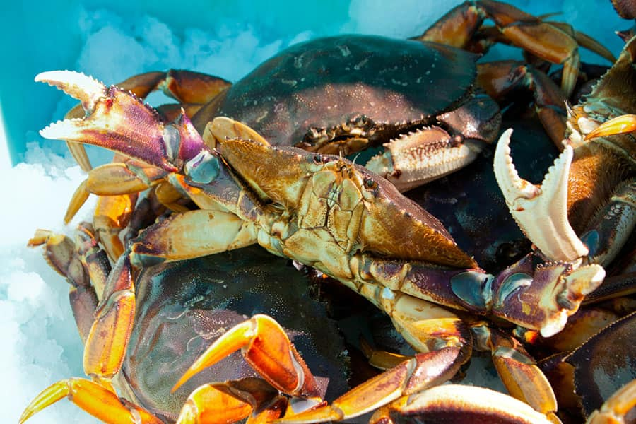 Norwegian Cruise to Alaska - Crab Excursion