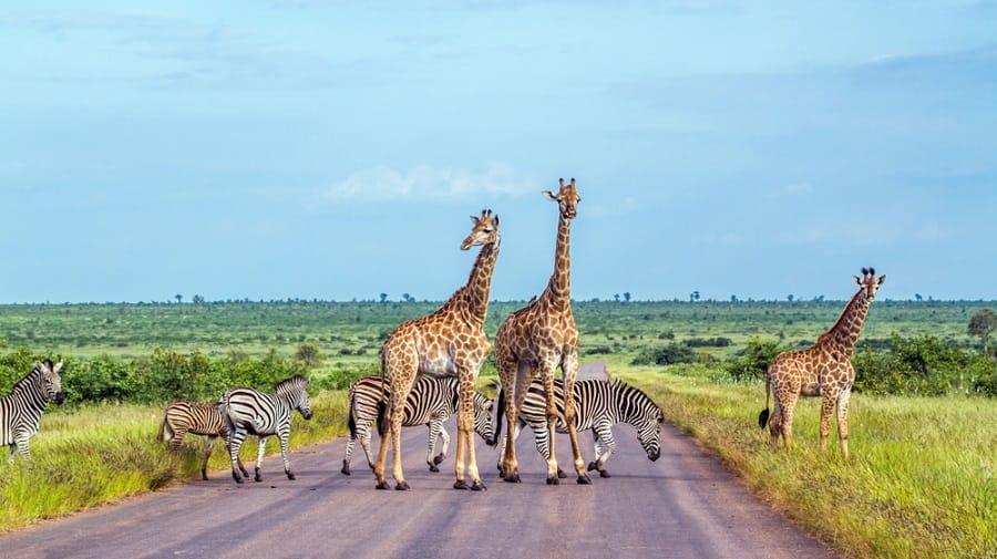 7 coisas inesperadas que você pode fazer em um cruzeiro na África do Sul