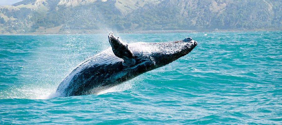 Observação de baleias em um cruzeiro em Auckland
