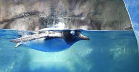 Begegnung mit der Antarktis und ihrer Unterwasserwelt