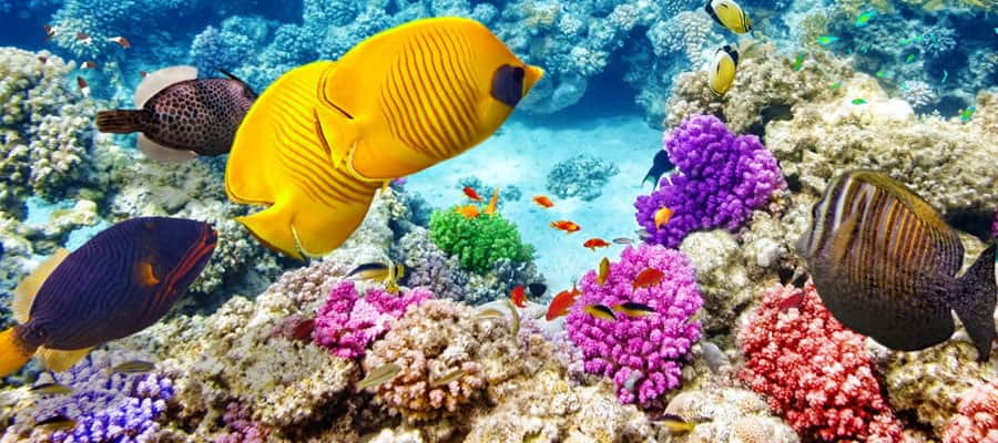 Breathtaking Coral Reef on an Australia cruise