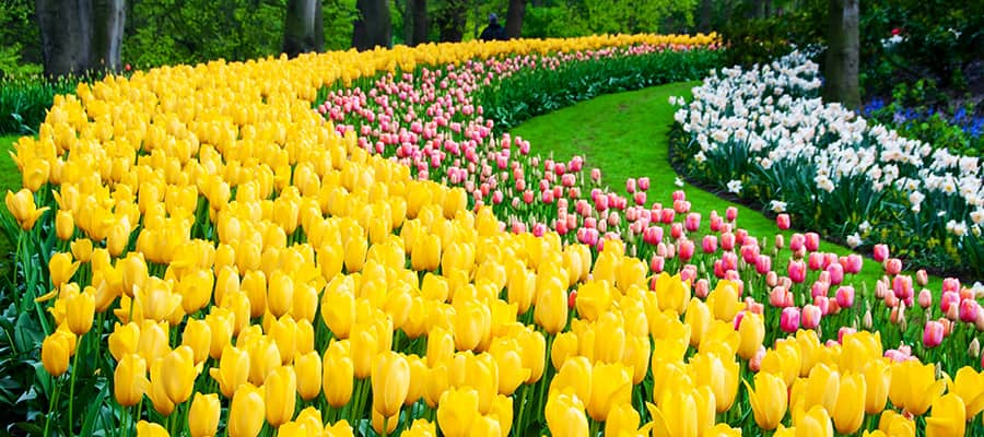 Cruise to the Keukenhof Park Garden in Europe