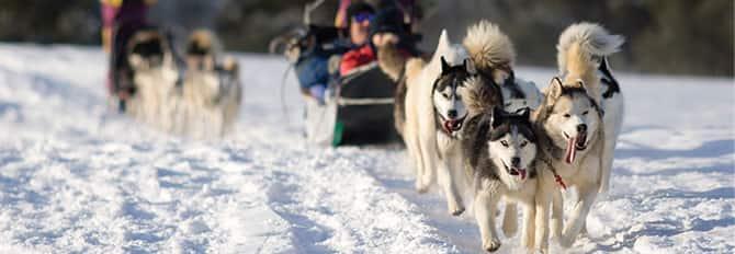 Goditi un giro con la slitta trainata dai cani in un tour tra i canili che ospitano i cani da slitta