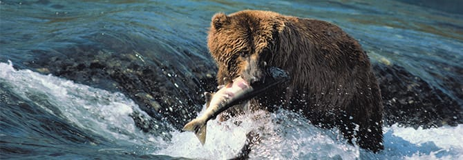 Experience Alaskan Wilderness - Bear Watching