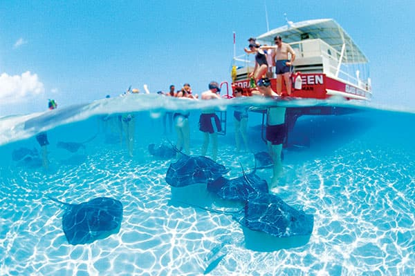 Stay active whilst cruising with an exciting Shore Excursion like swimming with the rays
