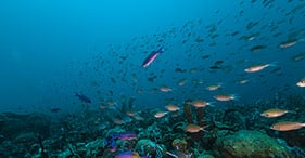 הצוללת אטלנטיס