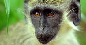 4X4 Adventure & Green Monkey Encounter