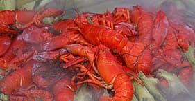 Acadia National Park & Lobster Bake