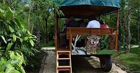 Ruínas maias & fazenda de temperos