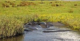 Tiere der Lagune und Mangroven in Placencia