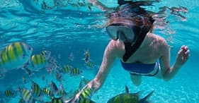 Barrier Reef Snorkel