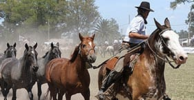 Buenos Aires com tradições gaúchas & traslado