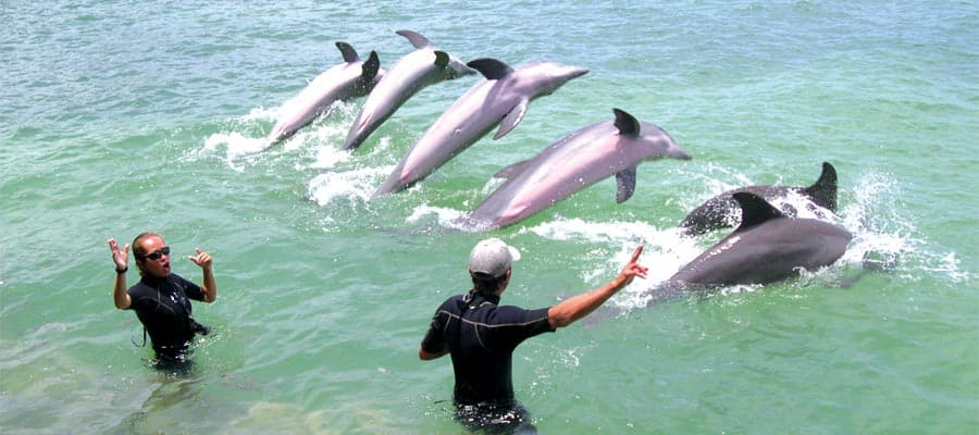 Dolphin Encounter in Belize