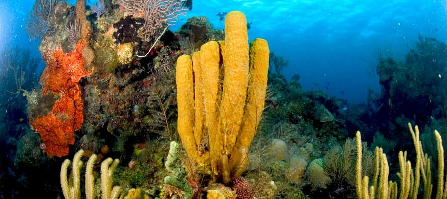 Colourful underwater scenery on your Caribbean cruise