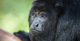 Howler Monkey Sanctuary & Belize Zoo