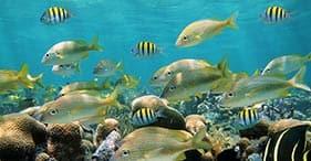Barrier Reef – Two Tank SCUBA Dive