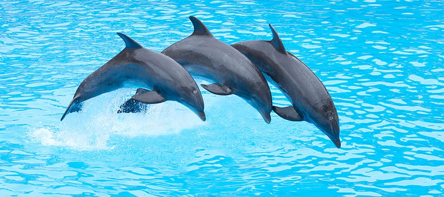 Cruise to the Bahamas and swim with dolphins