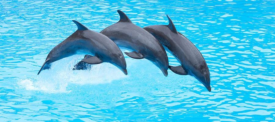 Faça um cruzeiro para as Bahamas e nade com os golfinhos