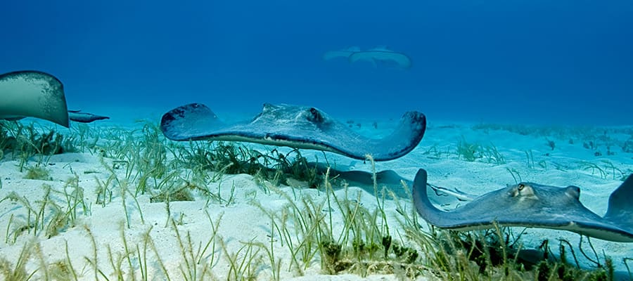 Swim with stingrays on your cruise from Florida
