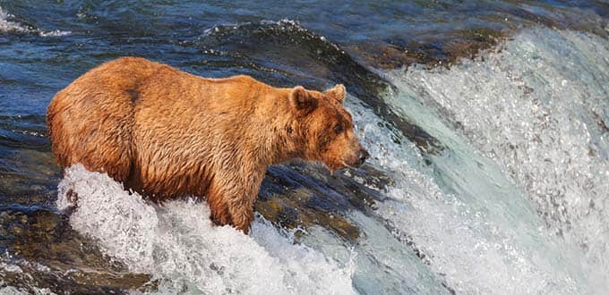 Experience the wild side of Alaska.