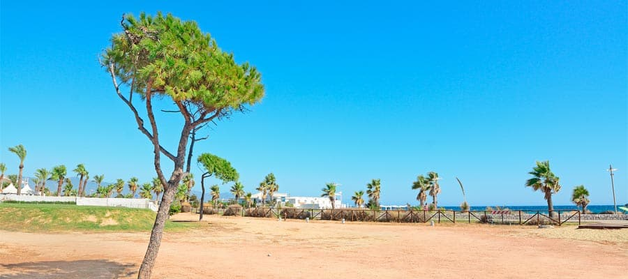 Pine tree in Poetto beach on your Europe cruise