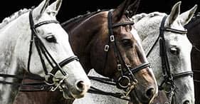 ספרד על קצה המזלג–טעמים וסוסים