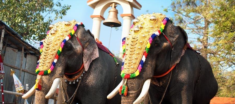 Elefanti decorati con crociere a Cochin